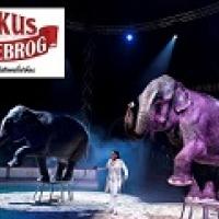 Cirkus Dannebrog, med nye artister og gratis cirkus ZOO - Spar 25%